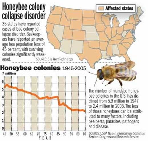 the consequences of the bee colony collapse disorder Colony collapse disorder: soy tie to bee die-off published in ge and bee colony collapse disorder the quarterly magazine of the weston a price foundation.